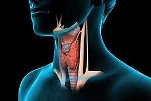Pajzsmirigy Műtétek